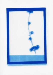 Botanical Frames 57