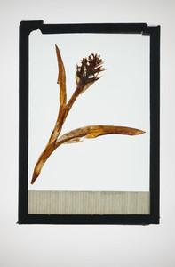 Botanical Frames 58