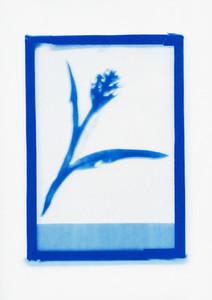 Botanical Frames 60