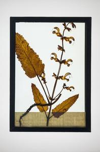 Botanical Frames 61
