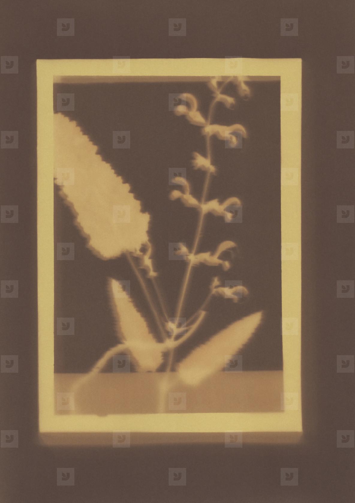 Botanical Frames  62