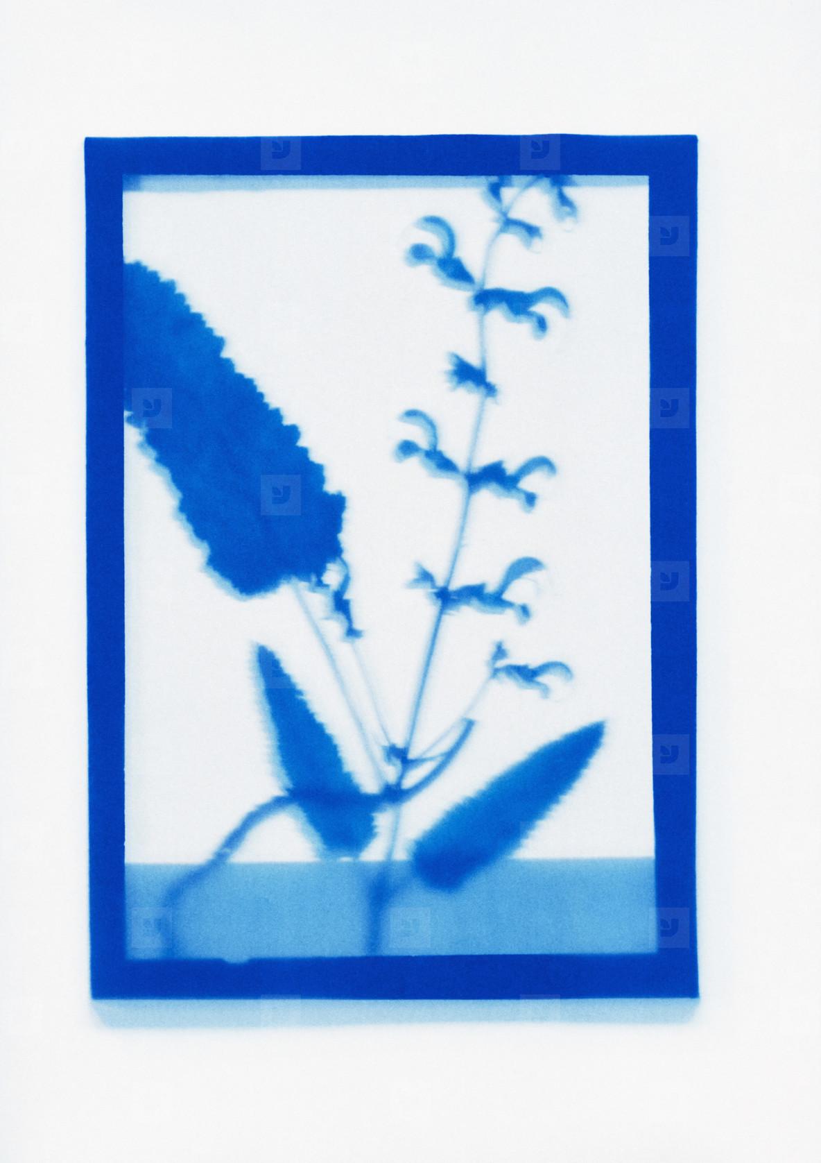 Botanical Frames  63