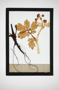 Botanical Frames 67