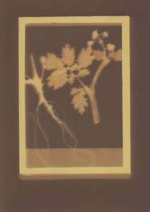 Botanical Frames 68
