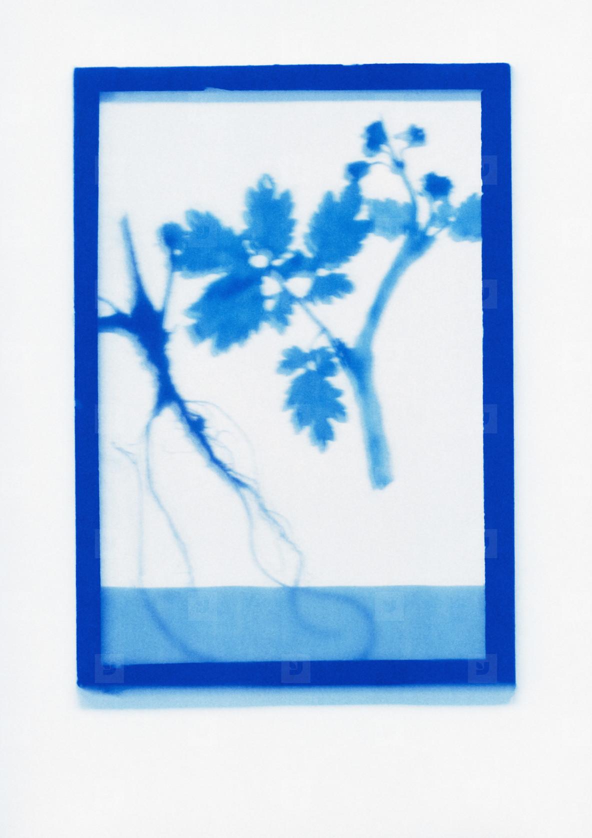 Botanical Frames  69