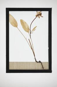 Botanical Frames 70