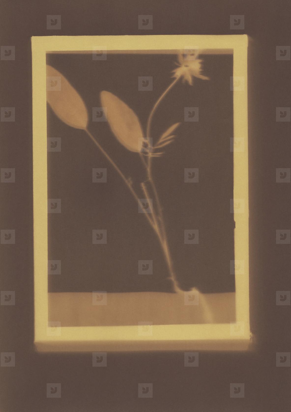 Botanical Frames  71