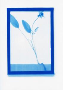Botanical Frames 72