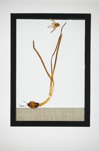 Botanical Frames 73