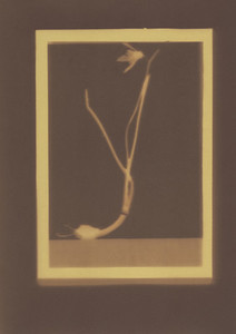 Botanical Frames 74