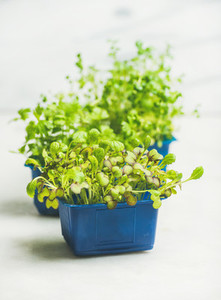 Fresh spring green live radish kress sprouts  white marble background