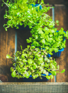 Radish kress  water kress and coriander sprouts over wooden background