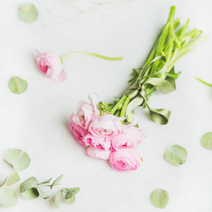Light pink ranunkulus flowers on marble background