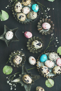 Colorful quail eggs in molds  dried wild flowers  leaves