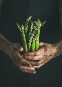 Bunch of fresh green asparagus in dirty man s hands
