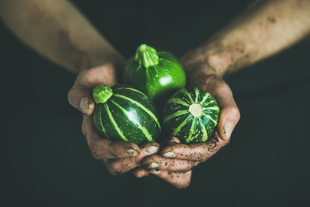 Farmer holding fresh seasonal green round zucchinis in his hands