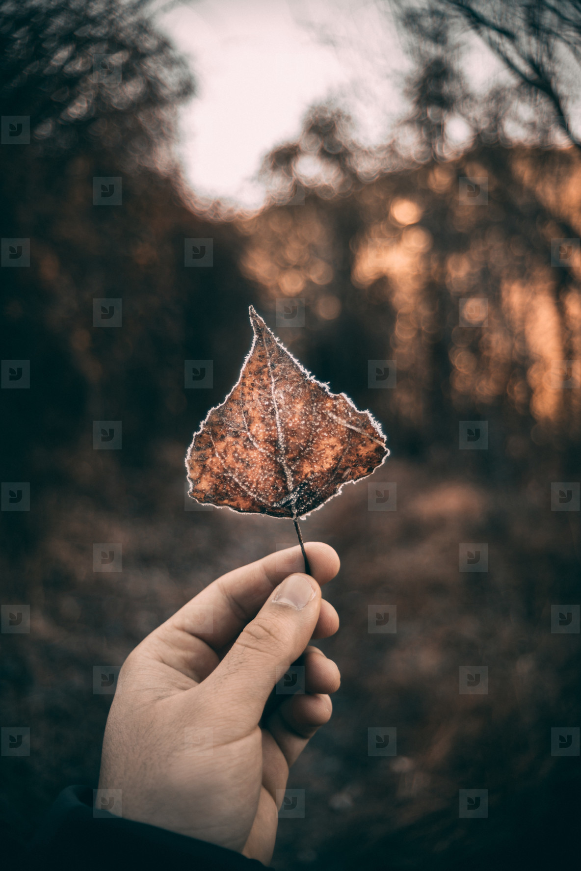 Leaf in a forest