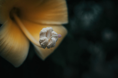 Macro of yellow flower pistil