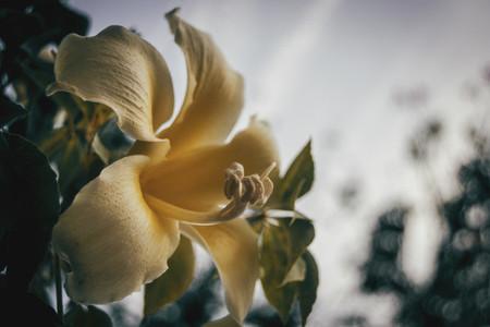 Macro of yellow flower pistil