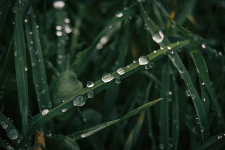 Drops of water on grass