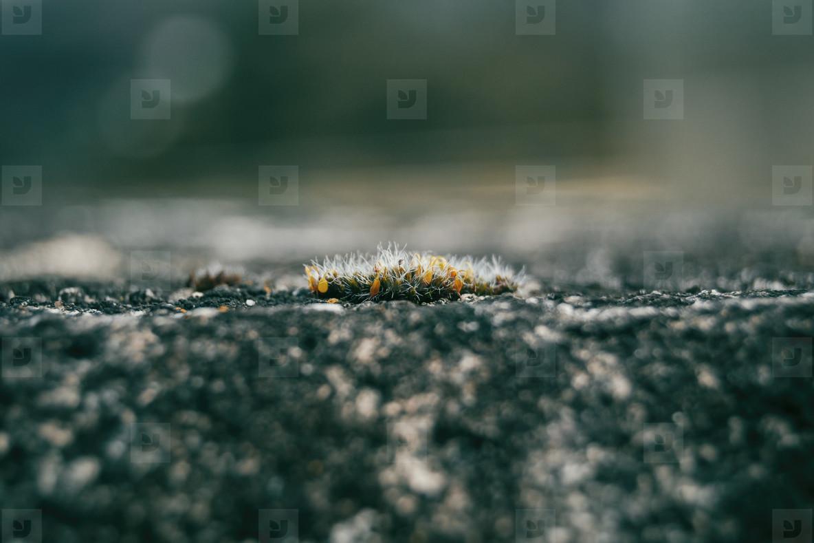 moss on stone