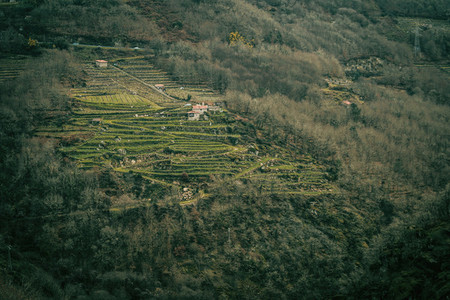 Vineyards in the ribeira sacra