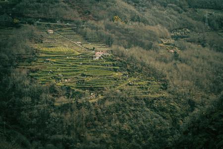 Vineyards in the ribeira sacra
