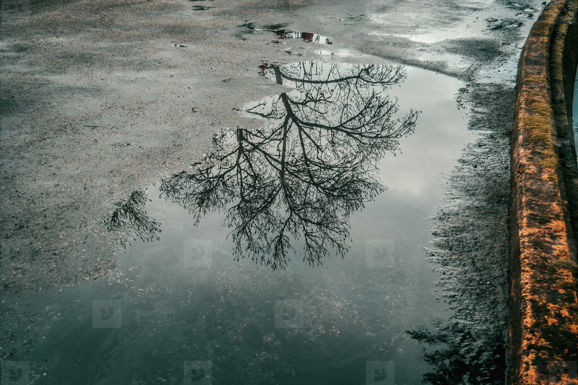 Puddle on road reflecting tree