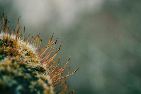 moss filaments very close