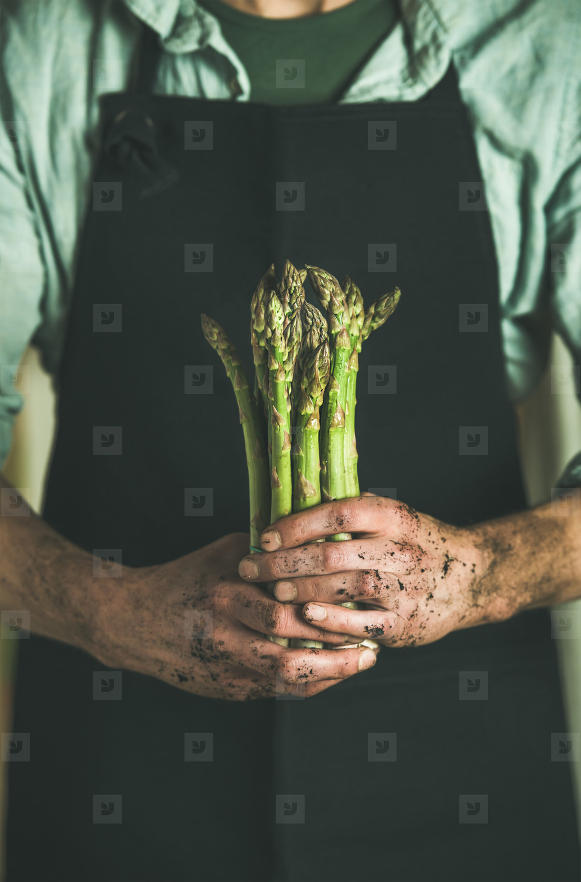 Bunch of fresh uncooked seasonal asparagus in dirty farmers hands