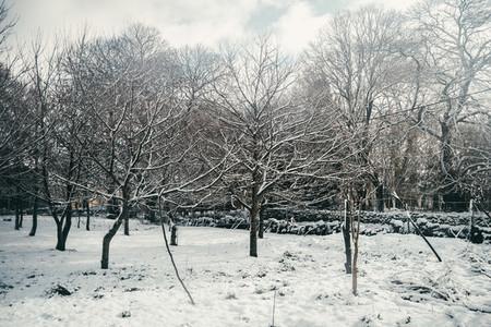 Snowy chestnut garden