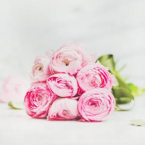 Light pink spring ranunkulus flowers on marble background  square crop