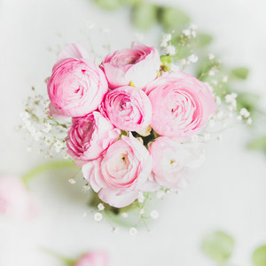Light pink ranunkulus flowers on white background
