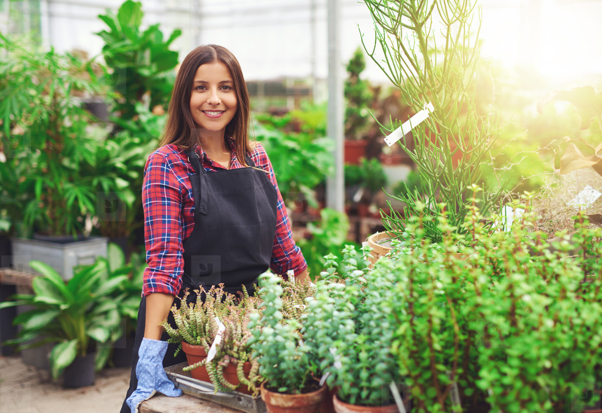 Smiling horticulturalist working in a greenhouse