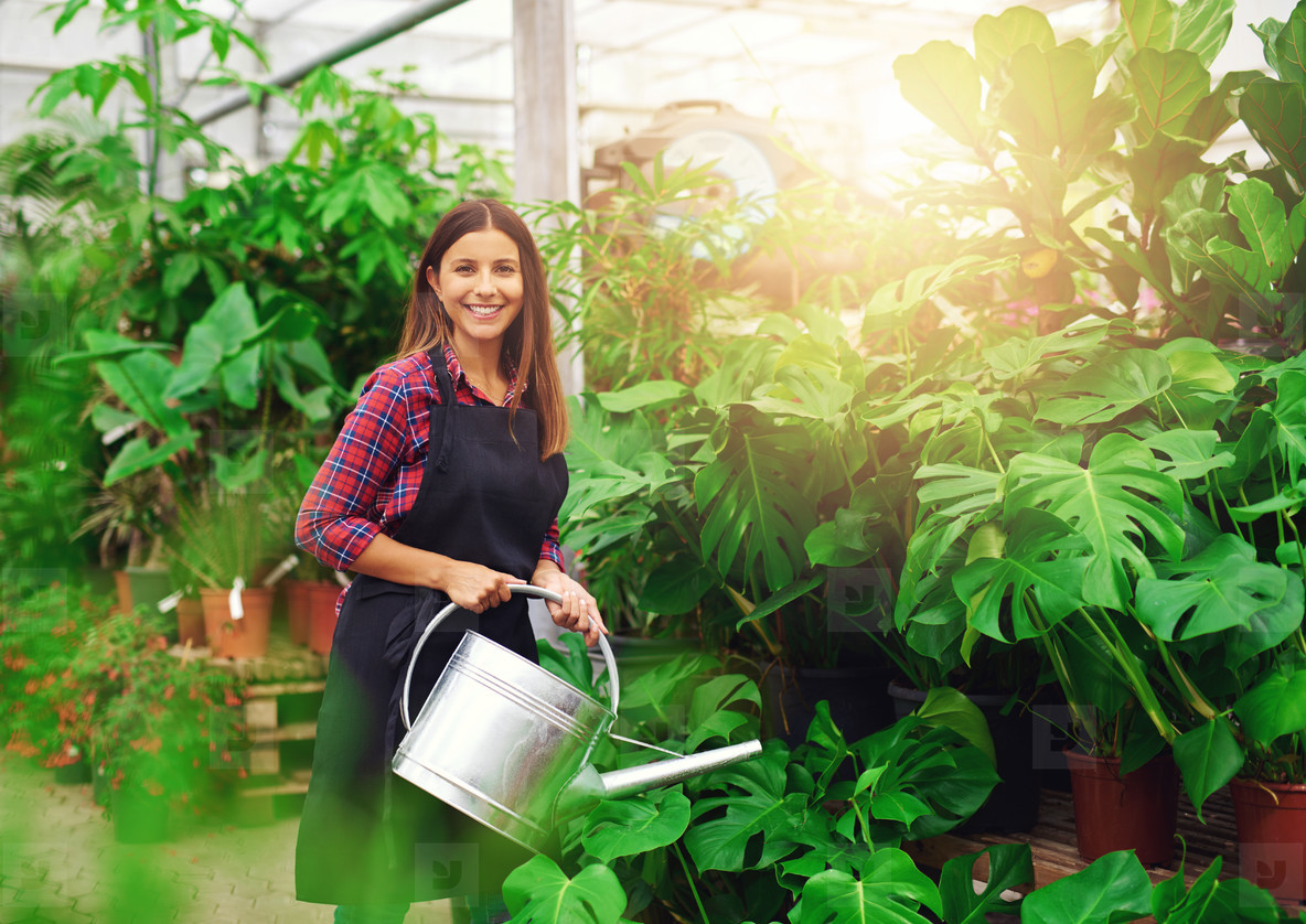 Young woman watering Delicious Monster plants