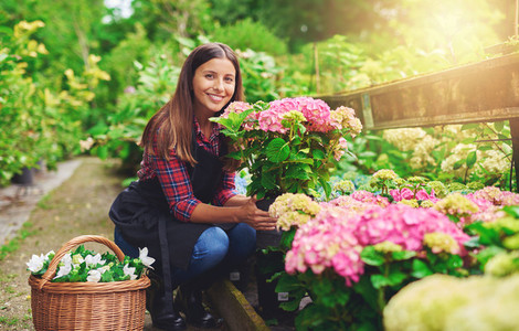 Happy young gardener selecting hydrangea plants