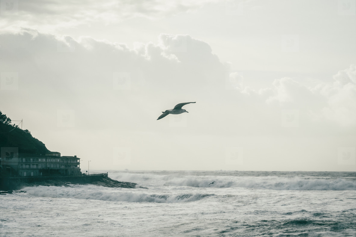 Seagull flying on the coast of Baiona  Galicia Spain