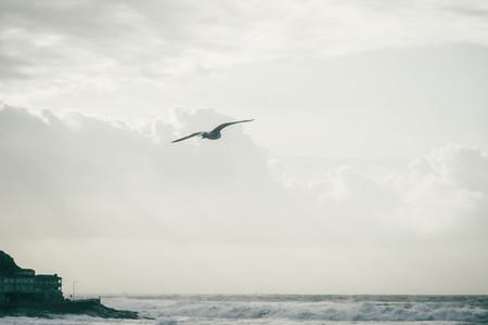 Seagull flying on the coast of Baiona Galicia Spain