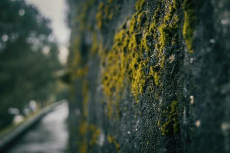 Old moss on the castle wall of baiona galicia spain