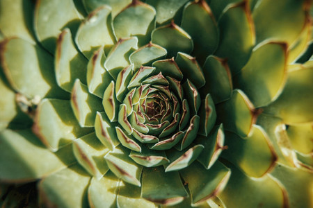 aerial view of a cactus sempervirens