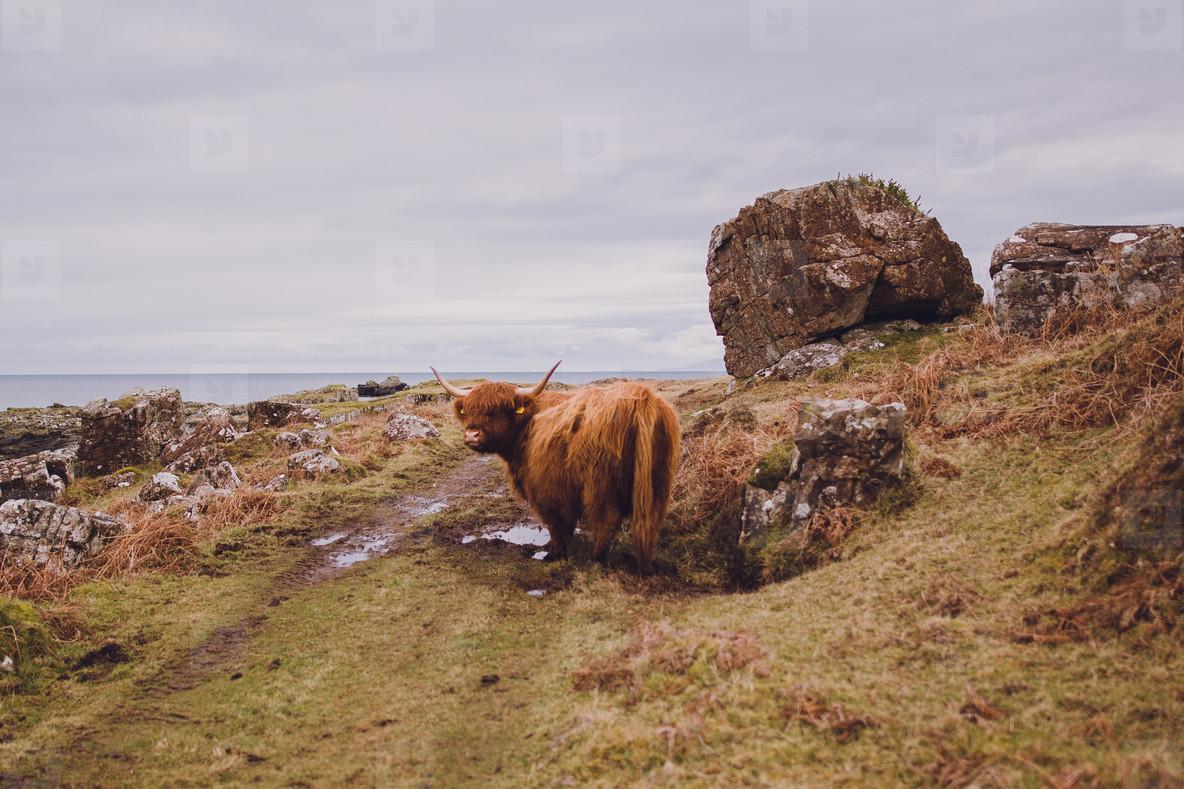 Scotland  29