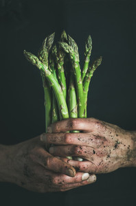 Bunch of fresh uncooked seasonal asparagus in dirty mans hands