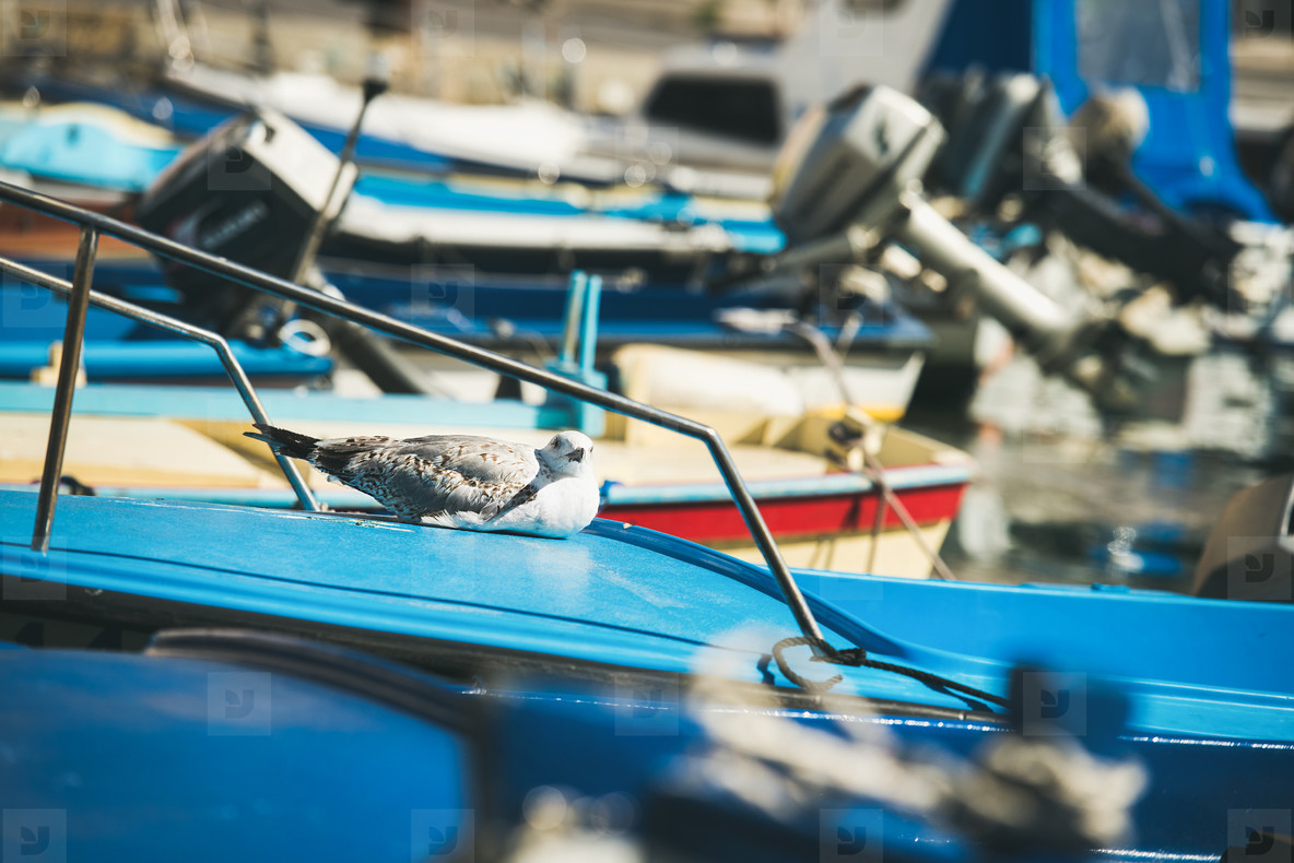 Seagull having rest on blue boat sundeck in Piran marina