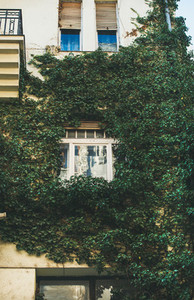 Building facade with window surrounded with ivy