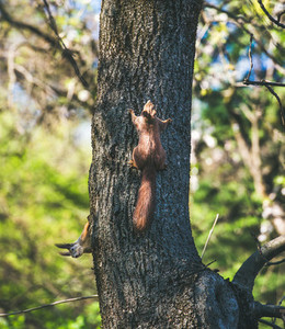 Squirrels on tree in Gellert hill park in Budapest Hungary