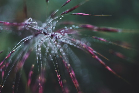Morning dew on grass 01