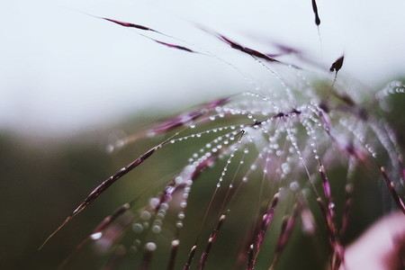 Morning dew on grass 02