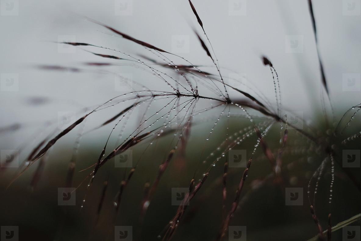 Morning dew on grass  04