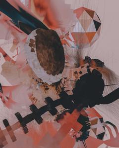 Aechmea Fasciata 09