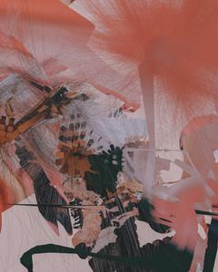 Aechmea Fasciata 07